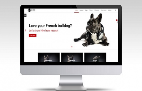 all4 french bulldog
